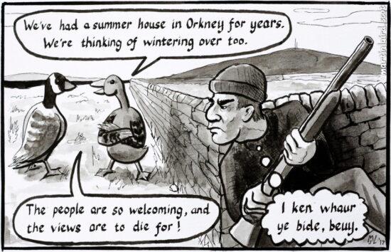 iscot cartoon orkney news goose martin scott laird