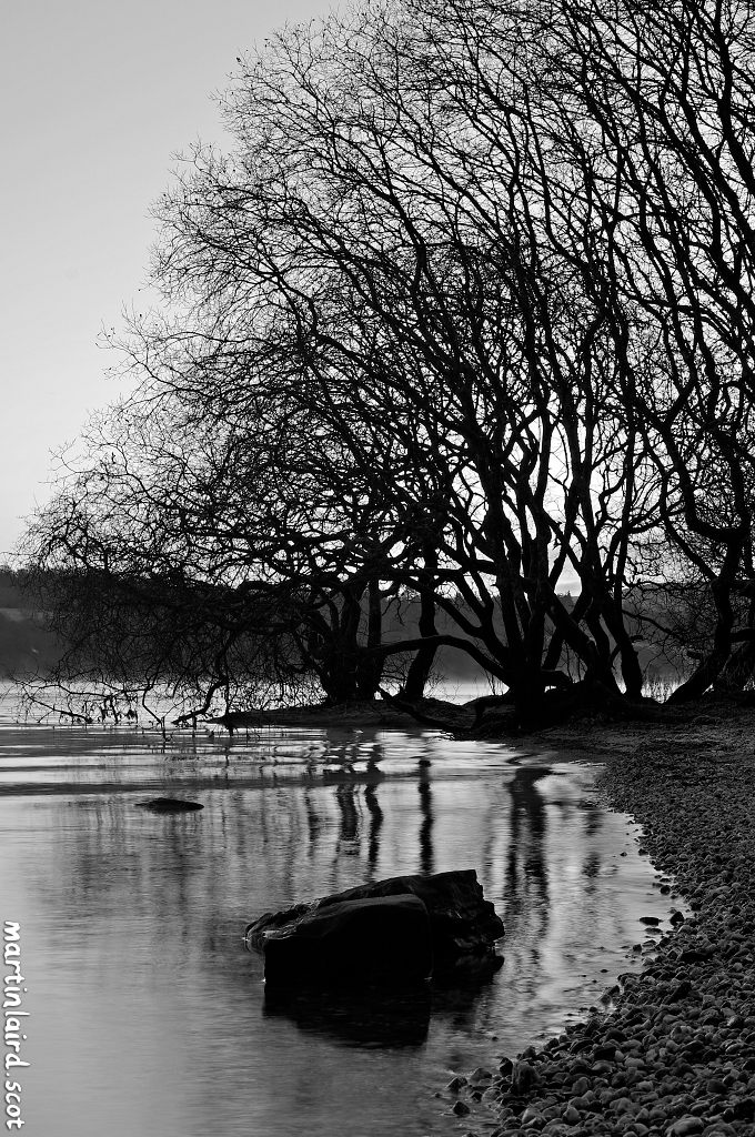 A black and white photograph of a rock and trees on a frosty morning on the shore of Loch Lomond, by Martin Scott Laird, 2017.