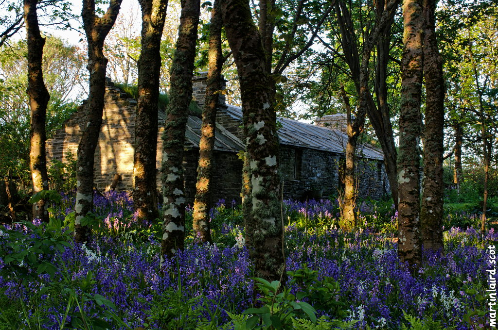 Bankburn Cottage dappled with sunlight, sitting amid trees and bluebells.