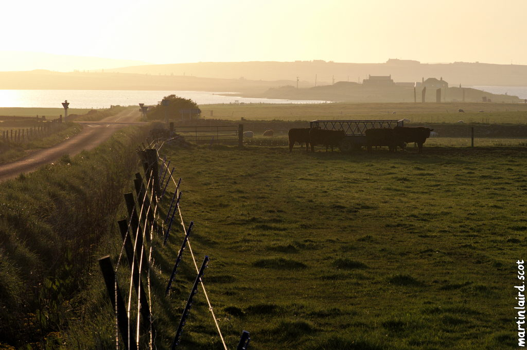 Golden light in the late afternoon. A road receding, with cattle and standing stones visible in the distance.
