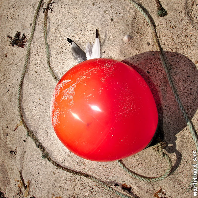 A buoy with a dead bird encircled with rope.