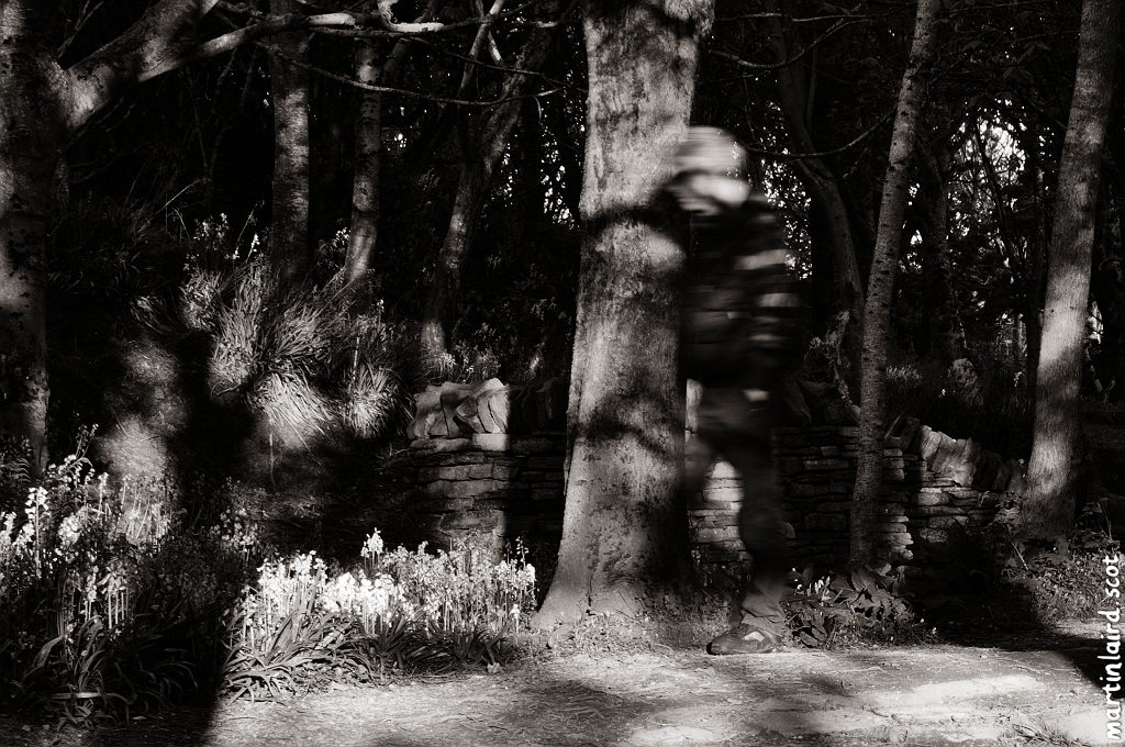 Black and white photo of woodland with a ghostly figure blurred by long exposure.