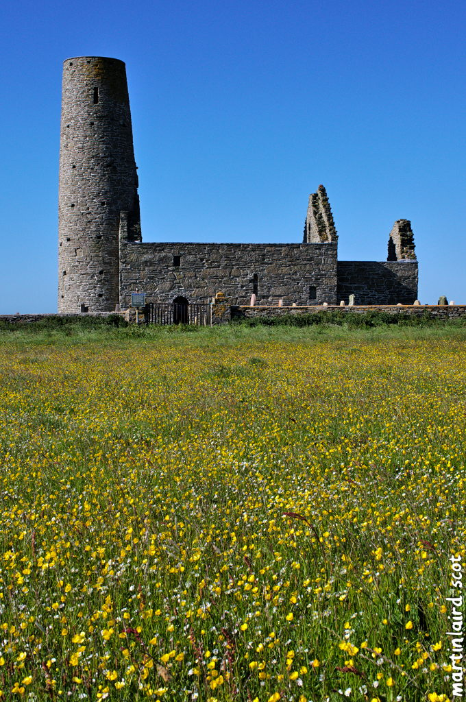 A field of buttercups in the foreground, with St Magnus Church in side profile shoing the distinctive round tower.