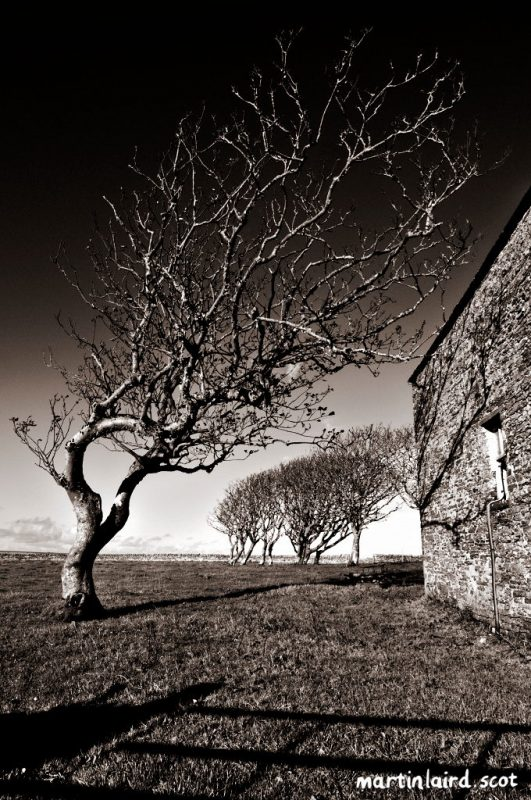 A windswept, gnarly tree reaching towards an old stone building for shelter.