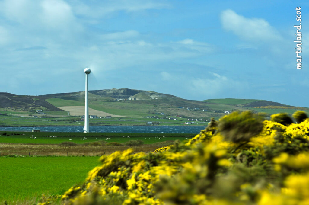A turbine and gorse blowing in the perpetual Orkney wind.